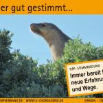 SCV_Werbekarten10