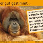 SCV_Werbekarten2
