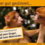 SCV_Werbekarten6